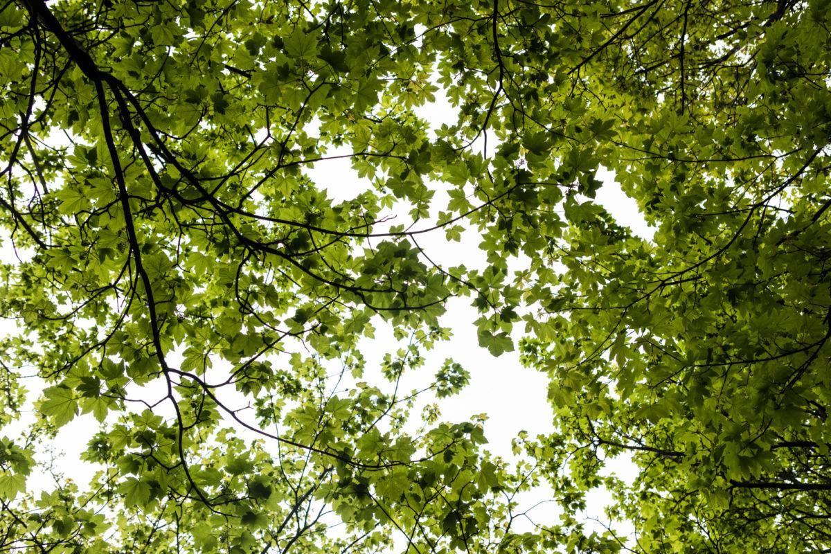 Flere Akademiker-medlemmer vil stemme på Miljøpartiet
